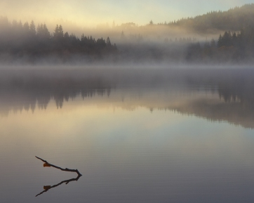 mist and submerged branch