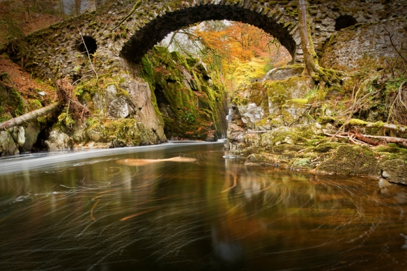 the hermitage in autumn