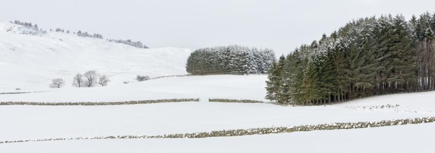 Dunkeld Jan 2016